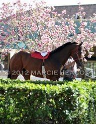 Paddock Magnolia Tree