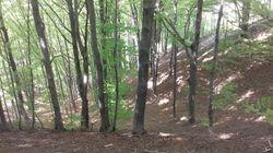 Bosco nelle vicinanze della casa/Wood in the neighborhood of our house