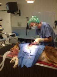 Dr. Brown performing emergency procedure