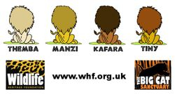 THE LIONS OF WHF BACK IMAGE