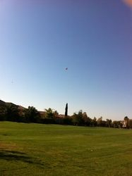 Afghan Kite Flying High!