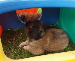 pups in play yard