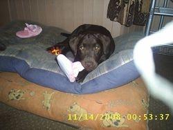 new pup (porcha)