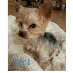 """""""Benji"""" (Dad)"""