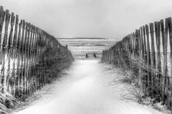 Snow Fence in Black and White
