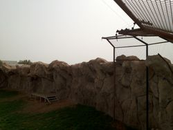 Tiger And Lion Cages