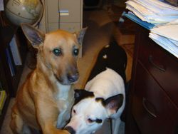 Sammy and Maggie