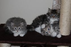 Anastasia, Ariana og Angelina, 8 uker
