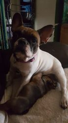 Cookie Dough & Puppy