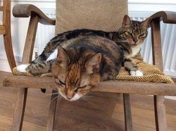Perdita and Ferdinand