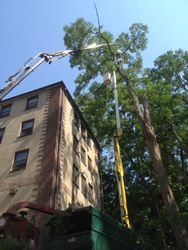 bucket and crane locust removal