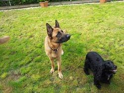 Oscar with Sally