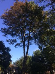 Tree Trimming in Garnet Valley, PA 19060