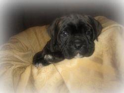 Ruthie 4 weeks