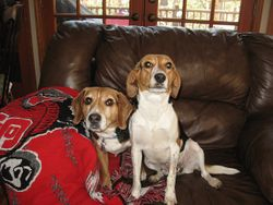 Buster & Lulu