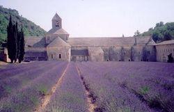 Provence Senanque Abbey