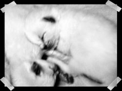 Shiloh's kittens DOB 11.11.09