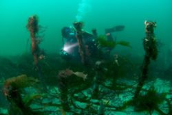 Wreck of HMS Colossus, Isles of Scilly