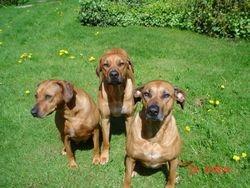Asha, Summer and Akala