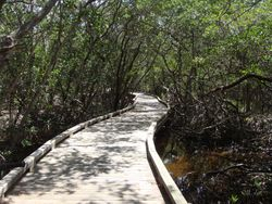Walk among the mangroves