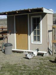 Original 8' x  8' coop, spring 2007