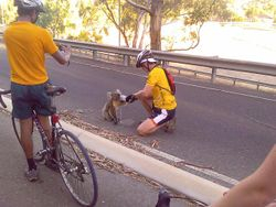 ...de koala's hebben dorst...