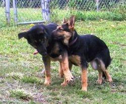 Atlas and Athena