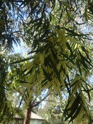Eurobodalla Botanical Gardens