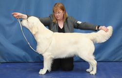 Class 3 Puppy Dog
