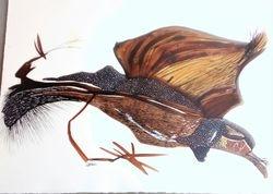 Ptica .Crtez akademske slikarke Biljane Gavranovic