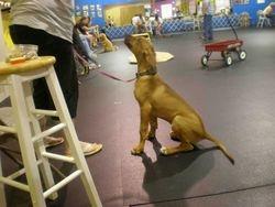 Tristan at puppy kindergarten