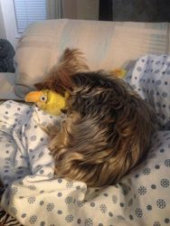 "Sleeping with ""Duck"""