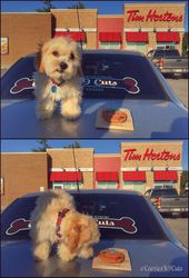 Paws In The Park Tim Hortons