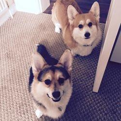 Sammy and Rosie
