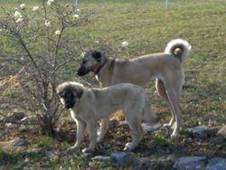 Pasa and Kazara