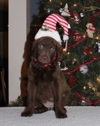 Josie's Christmas picture 2015