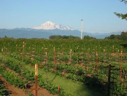 Big Garden & Mt. Baker in Spring