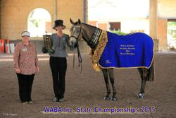 State Grand Champion Buckskin/Dun