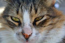 Kitty Face