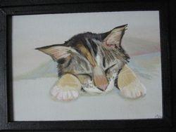 """""""Sleepy Kitten"""""""