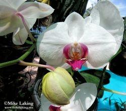 Joaquin's Orchids