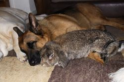 Blue (with his snuggle Bunny)