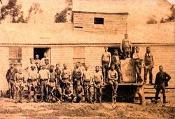 Shearers at Glenfine, 1890
