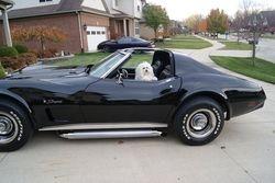 Nikos in the Corvette