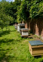 Morden Hall Apiary