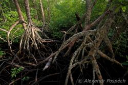 Roots of old trees 2