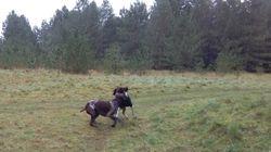 Fun in the pouring rain with Heston