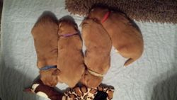Sleeping in a row at 15 days