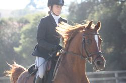 Westwind Schooling Show October 2011