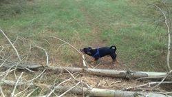 I fancy a very, very big stick!